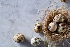 Conceptual still-life with quail eggs in hay nest over grey background, close up, selective focus. Conceptual still-life with fresh raw spotted quail eggs in hay stock photos
