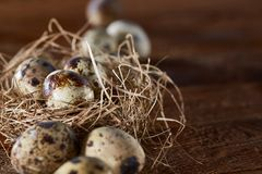Conceptual still-life with quail eggs in hay nest over dark wooden background, close up, selective focus. Conceptual still-life with fresh raw spotted quail eggs royalty free stock photo