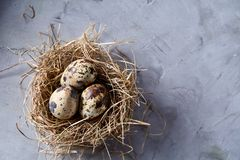 Conceptual still-life with quail eggs in hay nest over grey background, close up, selective focus. Conceptual still-life with fresh raw spotted quail eggs in hay royalty free stock image