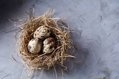 Conceptual still-life with quail eggs in hay nest over grey background, close up, selective focus. Conceptual still-life with fresh raw spotted quail eggs in hay stock photo