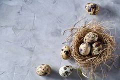 Conceptual still-life with quail eggs in hay nest over grey background, close up, selective focus. Conceptual still-life with fresh raw spotted quail eggs in hay royalty free stock photos