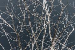 De takken van de boom in donkere nacht stock fotografie