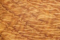 Conceptueel het landschapsbeeld van de eiken hout abstract aard als achtergrond Stock Foto