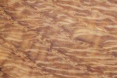 Conceptueel het landschapsbeeld van de eiken hout abstract aard als achtergrond Royalty-vrije Stock Foto's
