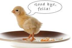 Conceptuele foto van kip en gebraden ei op een plaat die m gesturing Royalty-vrije Stock Foto