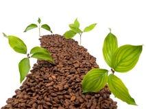 Conceptuele weg die van koffiebonen wordt gemaakt Royalty-vrije Stock Foto's