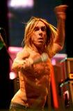 concert iggy pop Στοκ εικόνες με δικαίωμα ελεύθερης χρήσης