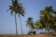 Concession stand and a motorbike in a palm grove. Royalty Free Stock Photography