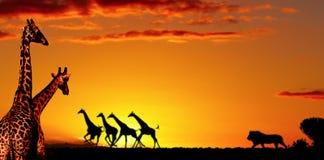 Concetto africano della natura fotografia stock