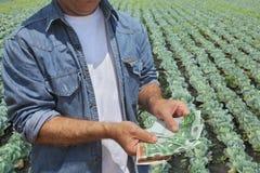 Concetto agricolo, agricoltore, soldi e campo Immagini Stock