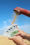 Concetto agricolo del fagiolo della soia Fotografie Stock Libere da Diritti