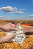 Concetto agricolo, il raccolto del cereale e soldi in mani Immagini Stock Libere da Diritti
