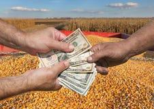Concetto agricolo, il raccolto del cereale e soldi in mani Fotografia Stock Libera da Diritti