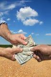 Concetto agricolo, il raccolto del grano e soldi in mani Fotografia Stock