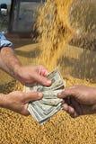 Concetto agricolo, il raccolto della soia e soldi in mani Fotografia Stock