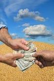 Concetto agricolo, il raccolto della soia e soldi in mani Immagini Stock Libere da Diritti