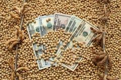 Concetto agricolo, soia e soldi Immagine Stock