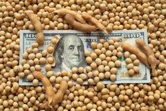 Concetto agricolo, soia e soldi Fotografie Stock Libere da Diritti