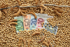 Concetto agricolo, soia e soldi dell'euro Immagini Stock