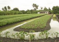 Concetto all'aperto di verdure dei prodotti dell'acqua del canale dell'agricoltore dell'azienda agricola Fotografie Stock Libere da Diritti