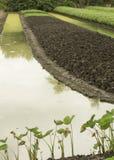 Concetto all'aperto di verdure dei prodotti dell'acqua del canale dell'agricoltore dell'azienda agricola Fotografia Stock