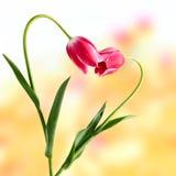 Concetto astratto del fiore Immagine Stock