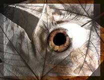 Concetto astratto dell'occhio Immagini Stock