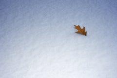 Concetto astratto di inverno, foglia della quercia in neve Fotografie Stock Libere da Diritti