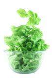 Concetto chiaro dell'insalata della lattuga Immagini Stock