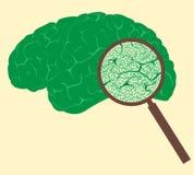 Concetto con il segno ed il cervello umano di percentuale illustrazione vettoriale