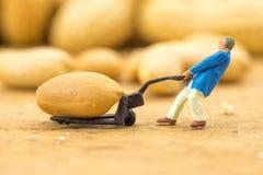 Concetto creativo con la gente miniatura Lavoratori che tagliano i dadi a pezzi fotografia stock