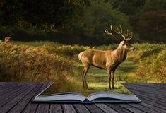 Concetto creativo del paesaggio del maschio dei cervi rossi Fotografia Stock Libera da Diritti