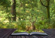 Concetto creativo del paesaggio del maschio dei cervi rossi Immagine Stock