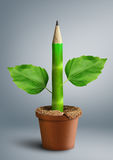 Concetto creativo di educazione primaria, matita con le foglie come gambo Immagini Stock Libere da Diritti