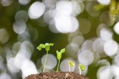 Concetto crescente del seme della pianta Immagini Stock Libere da Diritti