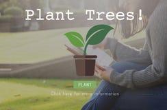 Concetto crescente di conservazione ambientale di ecologia degli alberi della pianta fotografie stock libere da diritti