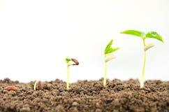 concetto crescente di semina di punto della pianta di agricoltura sul backgro bianco Immagine Stock Libera da Diritti