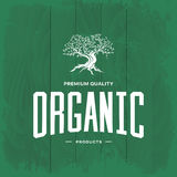 Concetto d'annata di logo di olivo isolato Fotografia Stock
