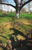 Concetto degli alberi di taglio Immagine Stock Libera da Diritti