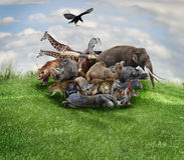 Concetto degli animali Fotografie Stock