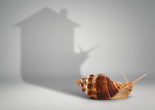 Concetto del bene immobile, lumaca con la casa dell'ombra Fotografia Stock
