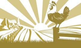 Concetto del campo dell'azienda agricola del gallo illustrazione vettoriale