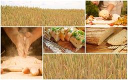 Concetto del collage del frumento tenero Fotografia Stock