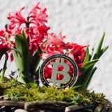 Concetto del fiore della moneta di Bitcoin Fotografie Stock Libere da Diritti