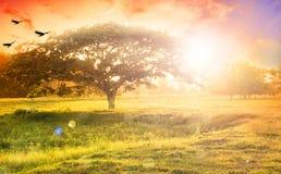Concetto del fondo della natura: Albero solo sul tramonto del prato Fotografie Stock