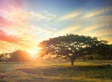 Concetto del fondo della natura: Albero solo sul tramonto del prato Fotografia Stock