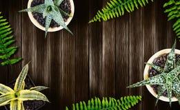 Concetto del giardino e della casa della pianta di aria di vista superiore su fondo di legno Immagini Stock Libere da Diritti