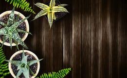 Concetto del giardino e della casa della pianta di aria di vista superiore su fondo di legno Fotografia Stock Libera da Diritti