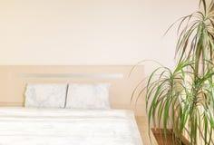 Concetto del giardino e della casa del trifasciata di sansevieria o della pianta di serpente nella camera da letto Fotografia Stock