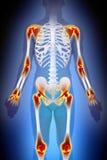 Concetto del maschio di anatomia di dolore di giunti di artrite illustrazione vettoriale